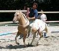 razza-cavallo-del-ventasso